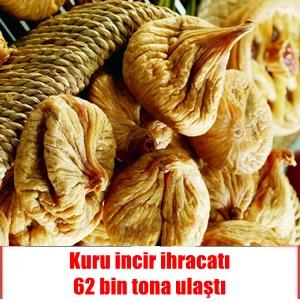 Kuru incir ihracatı 70 bin tona koşuyor