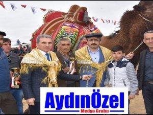 Deve Güreşi Festivali Nazilli'de Yaşatıldı