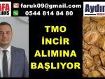 TMO İNCİR ALIMINA BAŞLIYOR